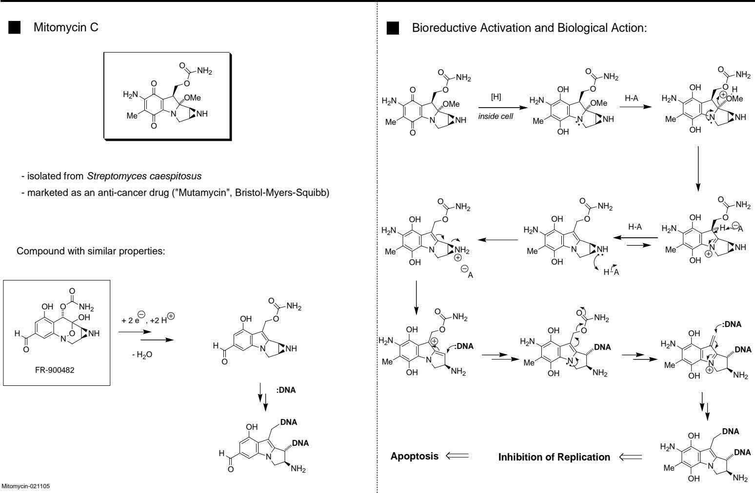 Mitomycin C Bioreductive Activation and Biological Action: O NH 2 O O O NH 2