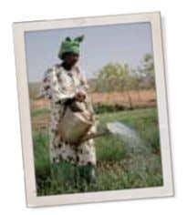 Handout Three (PAGE 3) MALI: A Simple Solution Works Best The village of Encara in northern