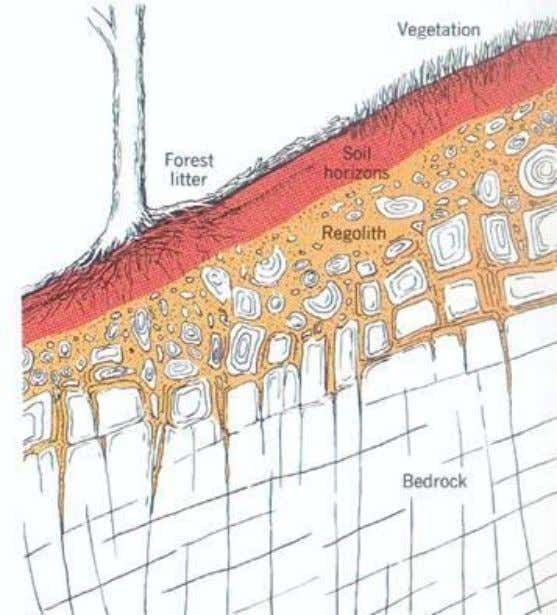 rock. Soil: The loose surface layer of earth that supports the growth of vegetation. (after Strahler