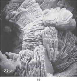 of their essential mineral elements. Kaolinite clay plates Cations important to plant nutrients: Calcium Ca 2