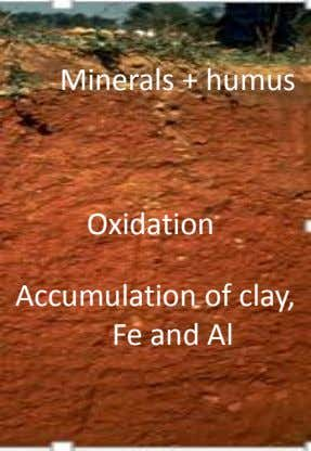 Minerals + humus Oxidation Accumulation of clay, Fe and Al