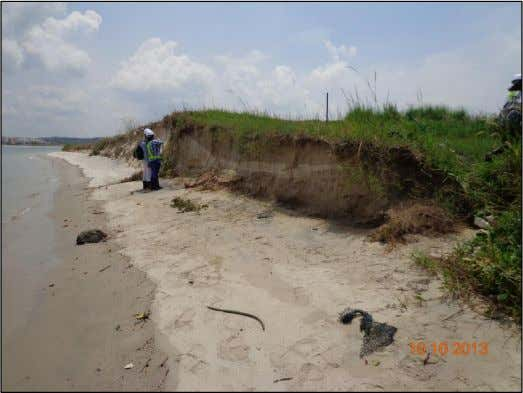 Entisols formed on Pulau Tekong landfill Pioneer grasses have taken root in the loose sand. There
