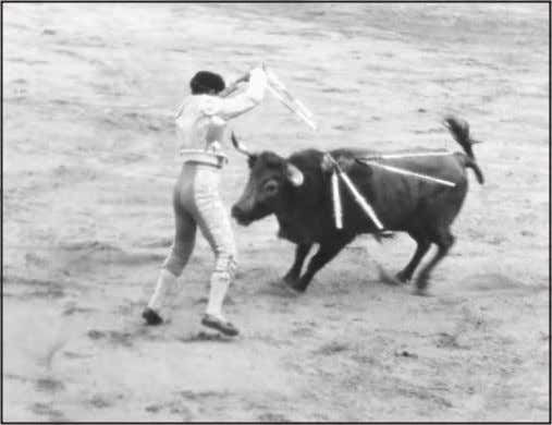 was from the 1950s to the '80s. There were corridas Trying to avoid the horns while