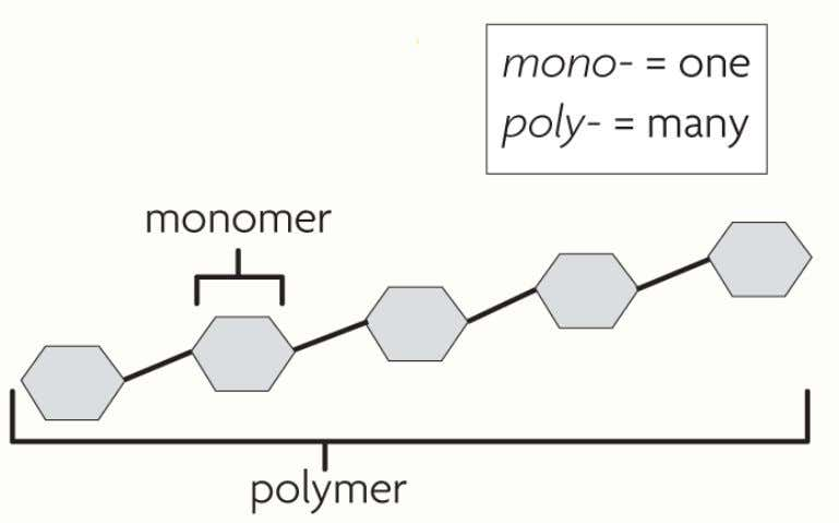 • Many carbon-based molecules are made of many small subunits bonded together. – Monomers are the