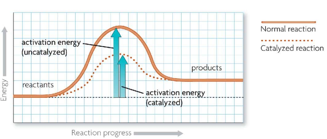 A catalyst lowers activation energy. • Catalysts are substances that speed up chemical reactions. • decrease