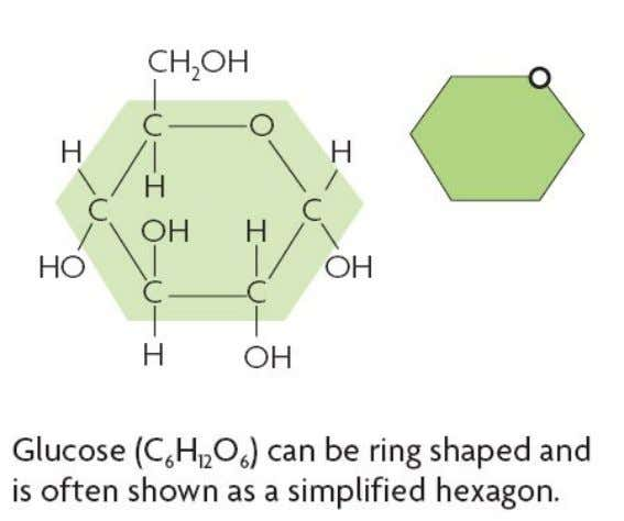 Carbohydrates made of carbon, hydrogen, and oxygen.
