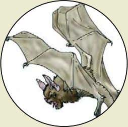 Dire Bat Monster Rating : 95 (typically found on dungeon level 1) Combat Dice :