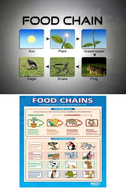 • A food chain is the way energy goes from one living thing to another through