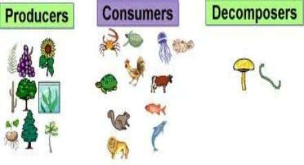The energy decreases in each successive step. Food Chain, Food Web and Trophic • made of
