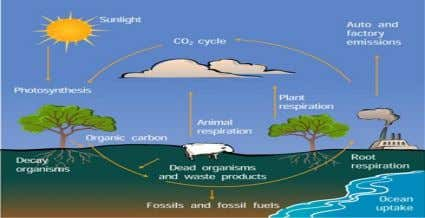  Nutrient Cycle: Living organisms need 30-40 elements for normal development.  Most important elements: ◦