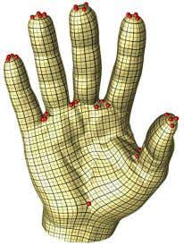 - Surface Parameterization using Branched Coverings Figure 9: Parameterization of the hand model. Branch points