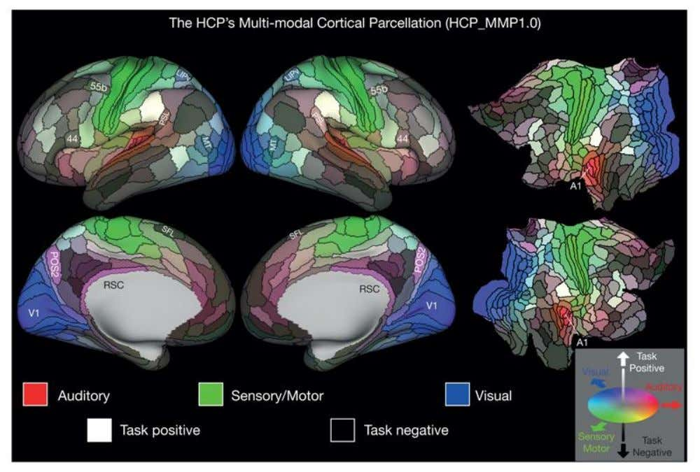 A multi- modal parcellation of human cerebral cortex 180 áreas distintas 2016.Nature doi: 10.1038/nature18933