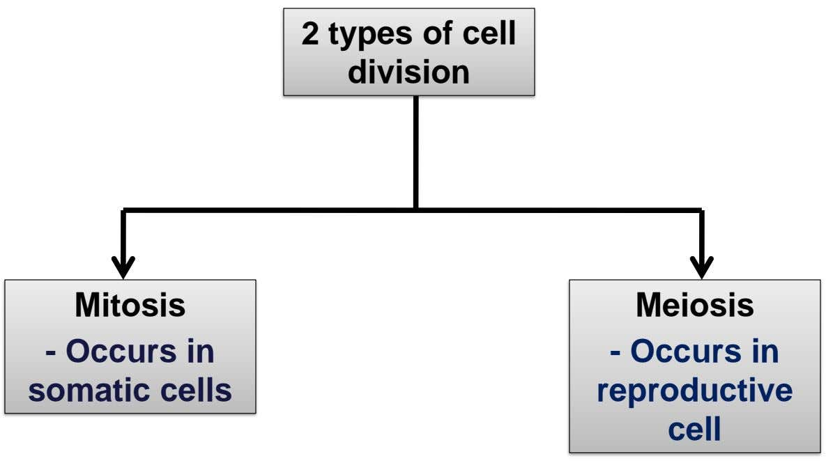 2 types of cell division Mitosis Meiosis - Occurs in somatic cells - Occurs in