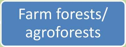 Farm forests/ agroforests