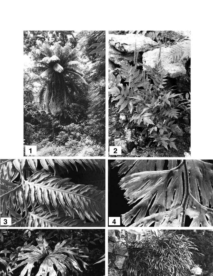C.N. Page / Review of Palaeobotany and Palynology 119 (2002) 1^33 5