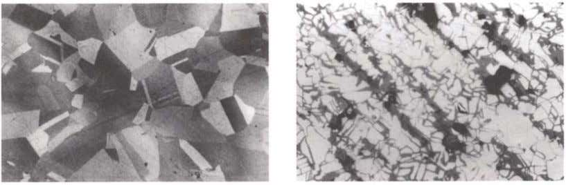 or where crystals are restrained from movement, such as in Figure 13. Photomicrograph ofa section through