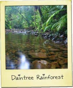 Management of Daintree Key players: a) Wet tropics Management authority = formed in 1990 to research
