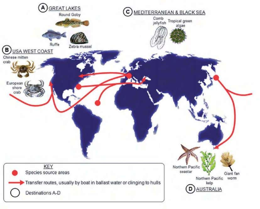 Explain the pattern of alien species invasions, and suggest the possible impacts of alien species on
