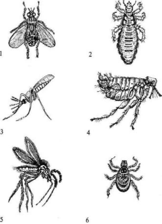 20 General Epidemiology Fig. 2. Arthropod-vectors of the causative agent: /-house fly; 2-body louse; J-mosquito