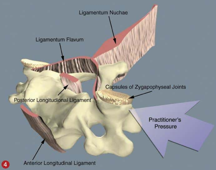 small intertransverse ligaments and muscles (Images 4 and The ligamentous structures surrounding a cervical vertebra.