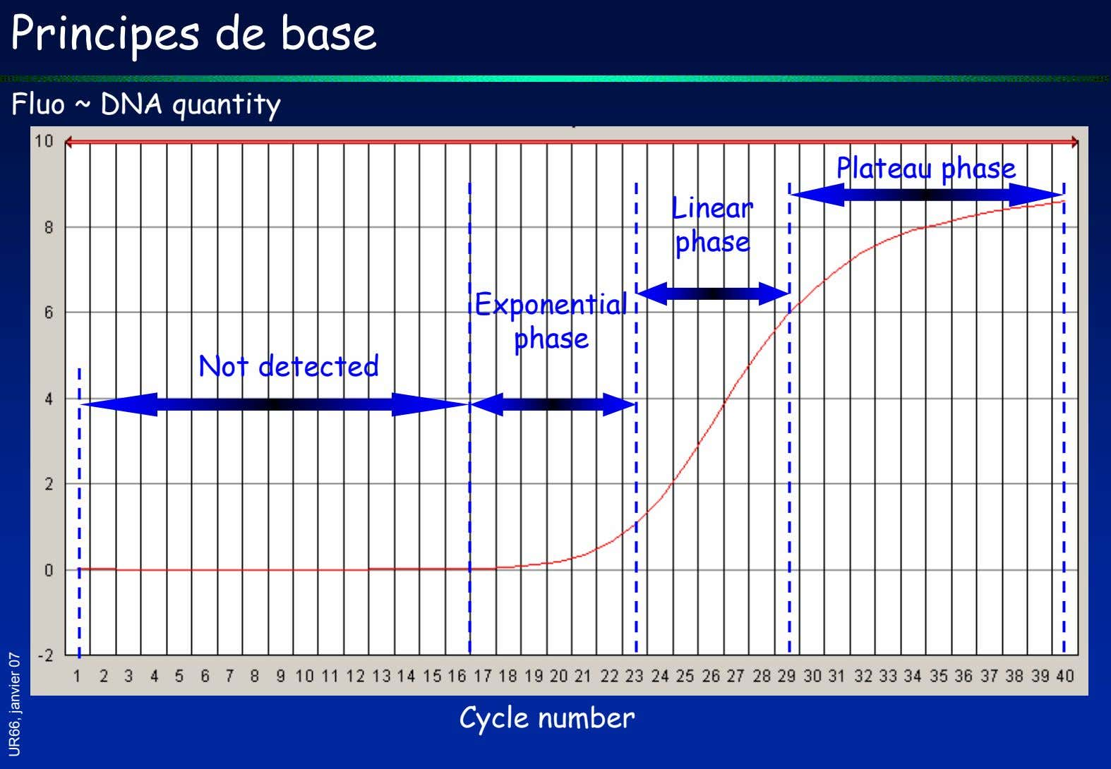 Principes de base Fluo ~ DNA quantity Plateau phase Linear phase Exponential phase Not detected