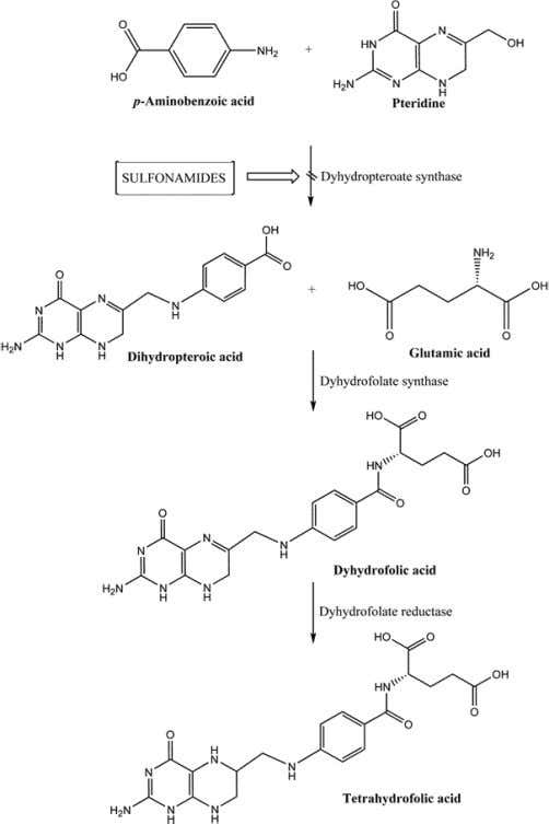 inhibition are presented sche- matically in Figure 6. Figure 6. Folic acid synthesis and sulfonamides site