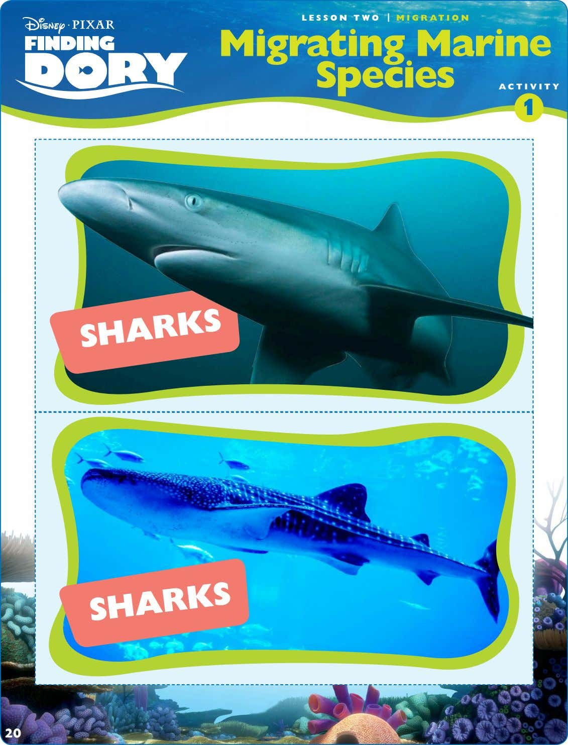 LESSON TWO | MIGRATION Migrating Marine Species ACTIVITY 1 SHARKS SHARKS 20