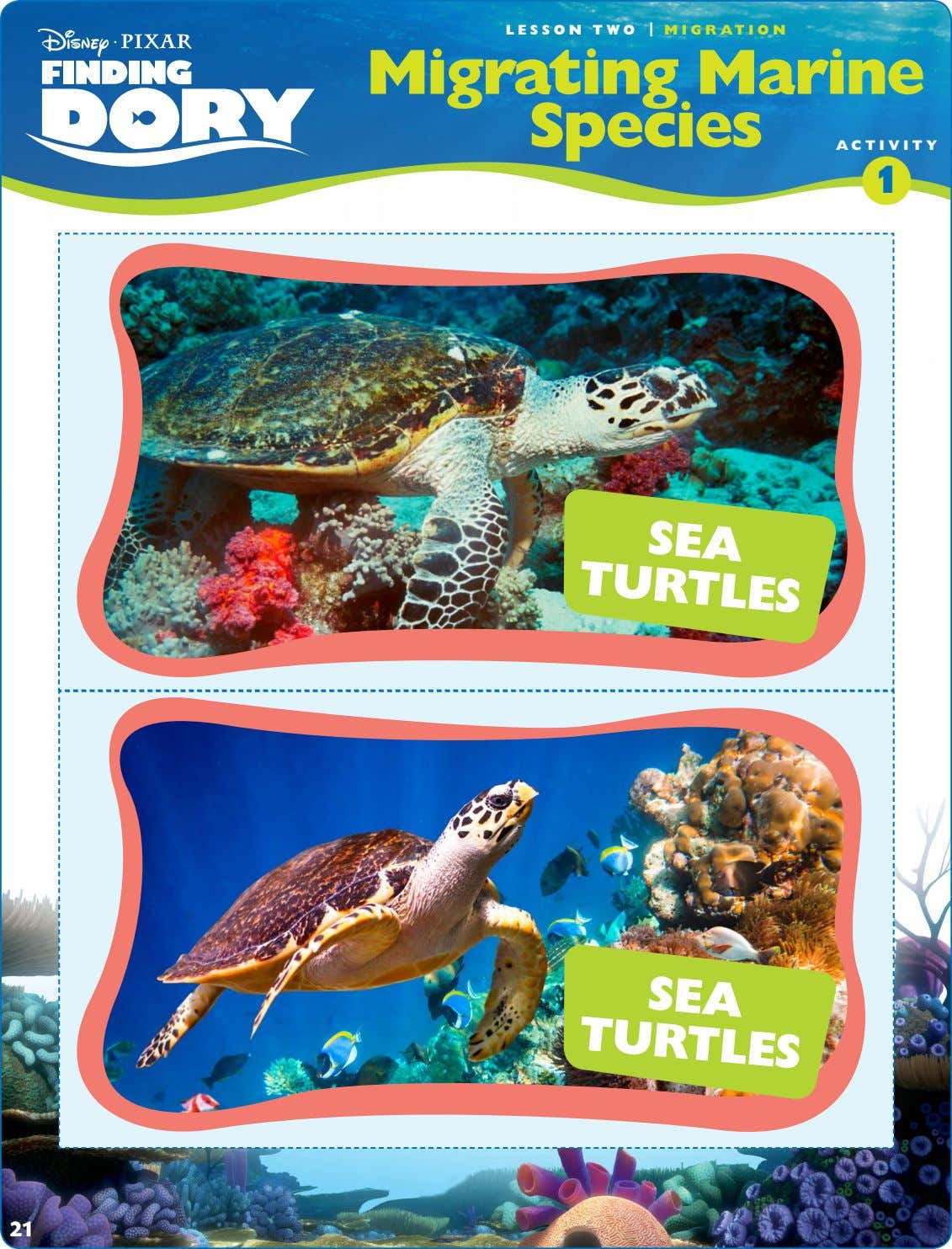 LESSON TWO | MIGRATION Migrating Marine Species ACTIVITY 1 SEA TURTLES SEA TURTLES 21