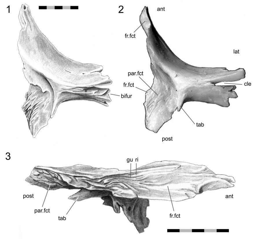 PALAEO - ELECTRONICA . ORG FIGURE 51. Postfrontal (DGPC1). 1. and 2. ventral views. 3. medial