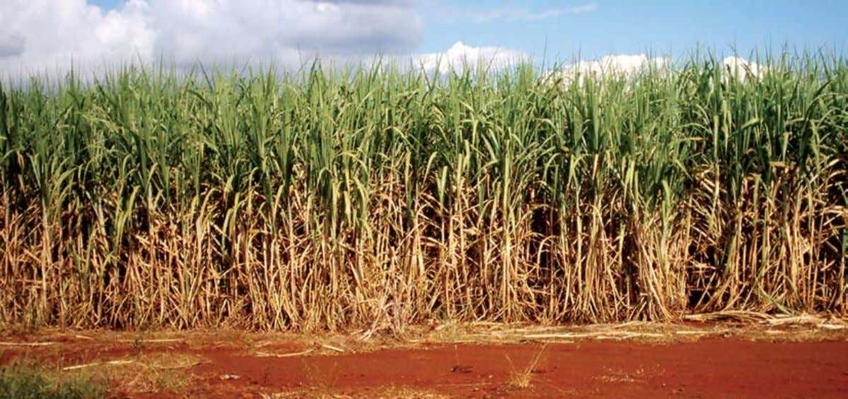 A sugarcane plantation in Brazil. Introduction Rising oil prices, energy security, and global warming concerns
