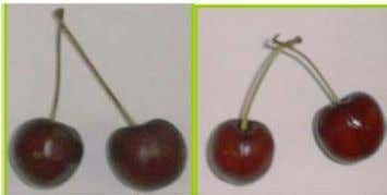 coated fruits did not produce any bad odor or off-flavor. Figure 1. Visual aspect of Control