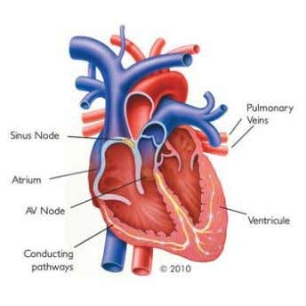 1 Introduction Atrial fibrillation (AF) is classified as cardiac arrhythmia; an irregular heartbeat. It is associated
