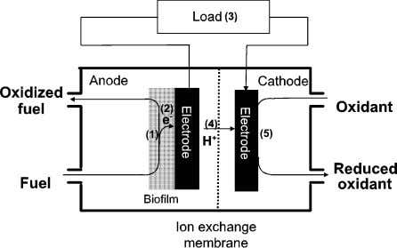 al. / Biosensors and Bioelectronics 18 (2003) 327 / 334 Fig. 1. Possible rate-limiting steps in