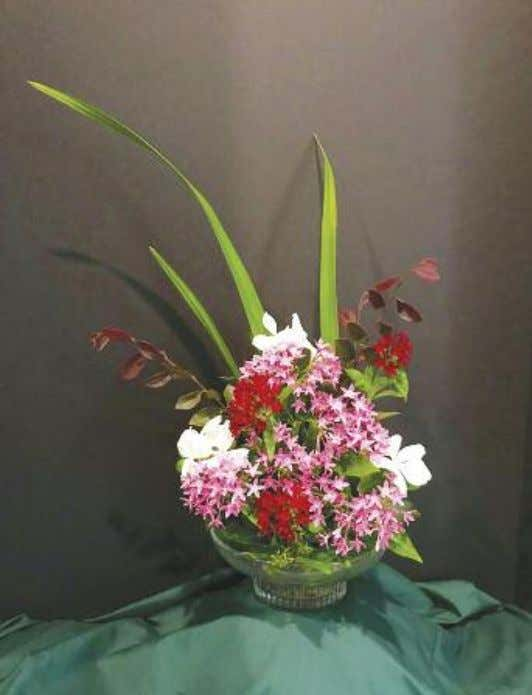GGC Member Janis D'Benedetto created this vertical line floral design. Burgundy and pink pentas and