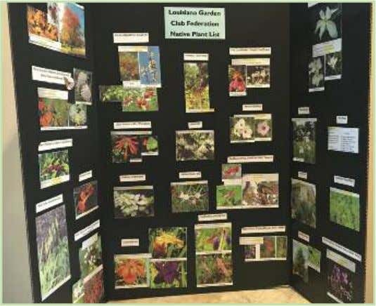 Club is federated by the LGCF and National Garden Clubs. An educational exhibit of Louisiana Garden