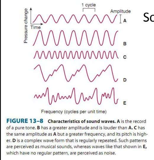 Sound waves • Amplitude  loudness • Frequency  pitch